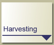 Learn more about Harvesting